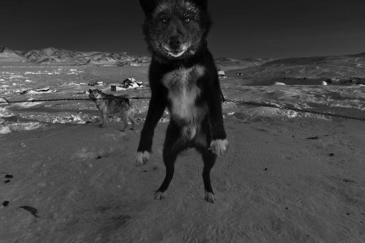 actualité, blog, découverte, photographe, ragnar axelsson, reportage, noir et blanc, arctique