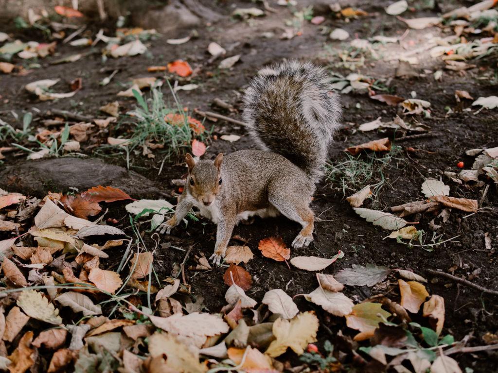 parc garden squirrel écureuil Edimbourg Ecosse Edinburgh scotland